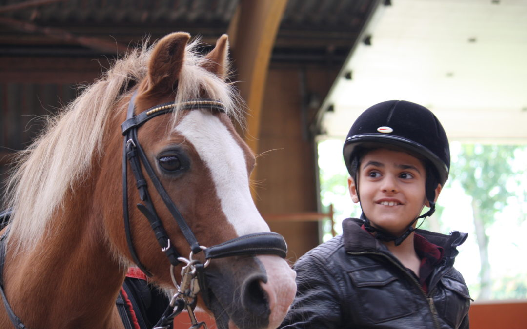 How Horses Are Changing Lives in Rotterdam